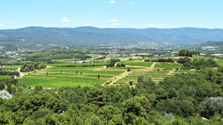vignes-de-la-france